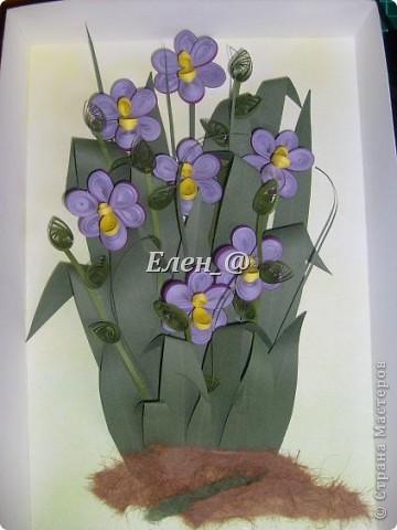 Я к вам снова с орхидеями. На этот раз вот такими фото 2