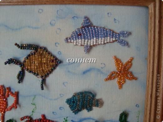Очаровательный подводный мир... фото 3