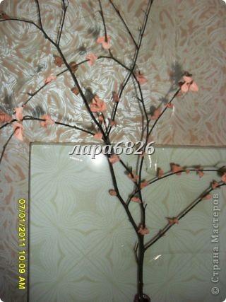 кто то делает денежное дерево,а я сделала вот такое. фото 26