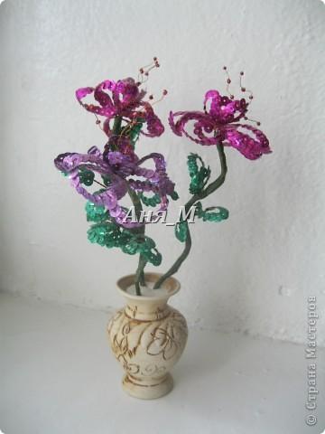 веточки яблони в цвету) фото 7