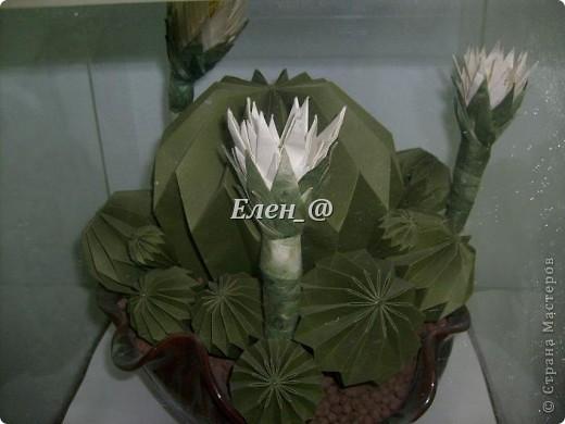 Вот такой кактус расцвел наконец у меня. Идея -не моя. В Хабаровском центре корейского бумажного творчества, которым руководит Софья Николаевна Баланюк я увидела другой кактус фото 2