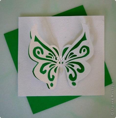 Мои бабочки. фото 2