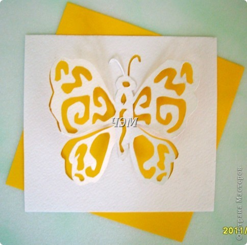 Мои бабочки. фото 4