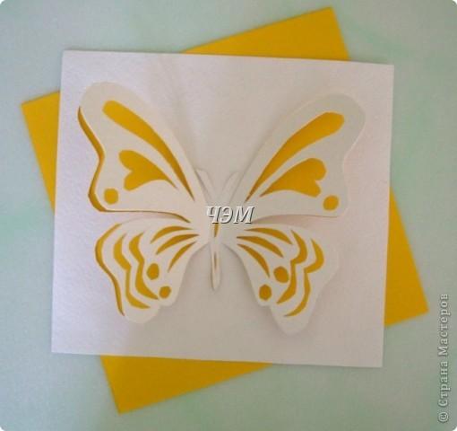 Мои бабочки. фото 5