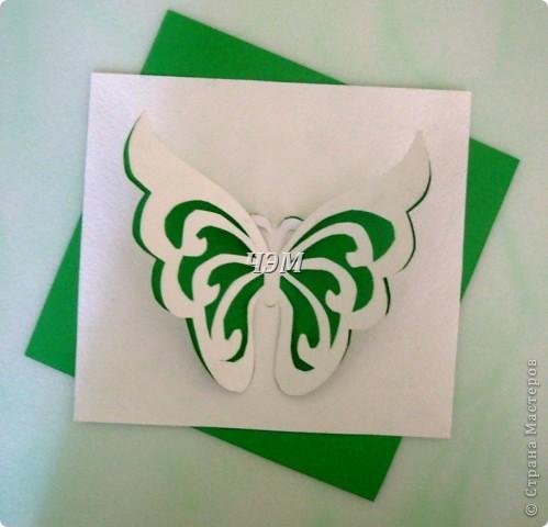 Мои бабочки. фото 3