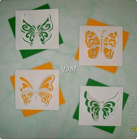 Мои бабочки. фото 1