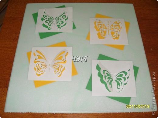 Мои бабочки. фото 6