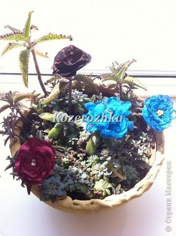 Первые летние цветы.  фото 6