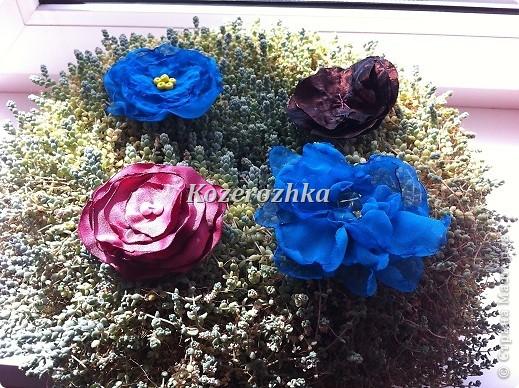 Первые летние цветы.  фото 1