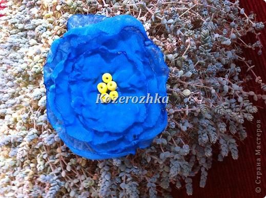 Первые летние цветы.  фото 2