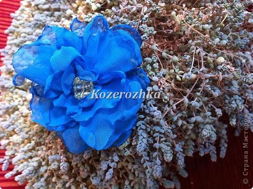 Первые летние цветы.  фото 5