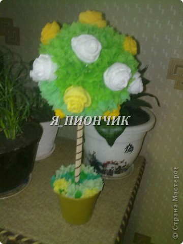 Мои деревца. фото 1