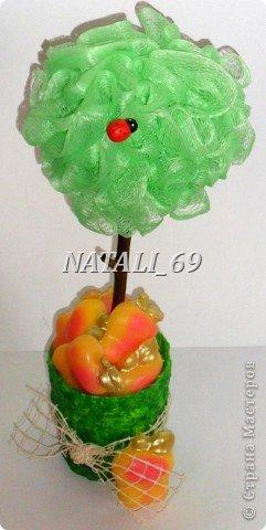 Молодильные яблочки наливные, душистые... не сладкие :) фото 4