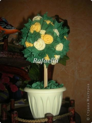 Мои первые деревья из роз....))    фото 2