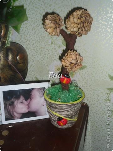 Желтые розы фото 3
