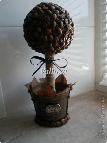 Летнее кофейное дерево фото 5