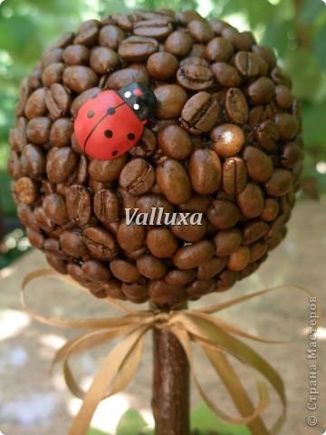Летнее кофейное дерево фото 3