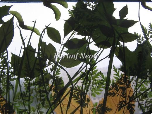 Наконец-то мой гербарий подсох. Давно хотел сделать такую картину - панно.  Теперь надо ещё листиков и цветочков засушить. Скоро осень, а потом зима. А зимой всегда не хватает листиков для творчества. :)))))) ВВЕРХУ ПАННО ВИДНЫ МАШИНЫ ПОД МОИМ ОКНОМ. Красная и белая!!! фото 3