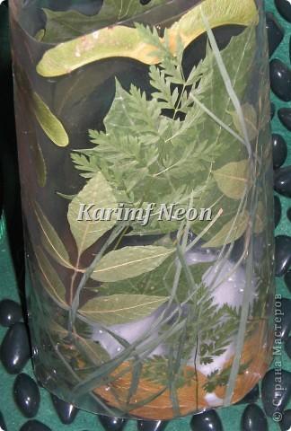 Наконец-то мой гербарий подсох. Давно хотел сделать такую картину - панно.  Теперь надо ещё листиков и цветочков засушить. Скоро осень, а потом зима. А зимой всегда не хватает листиков для творчества. :)))))) ВВЕРХУ ПАННО ВИДНЫ МАШИНЫ ПОД МОИМ ОКНОМ. Красная и белая!!! фото 6