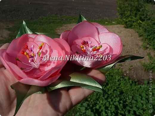 Еще цветы фото 2