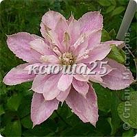 Добавила фото при дневном освещении,они гораздо лучше))))))) фото 10