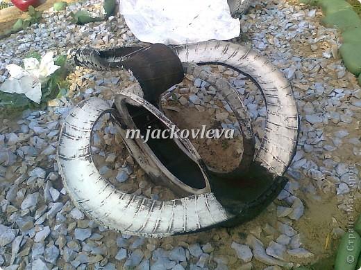 Семейство лебедей фото 9