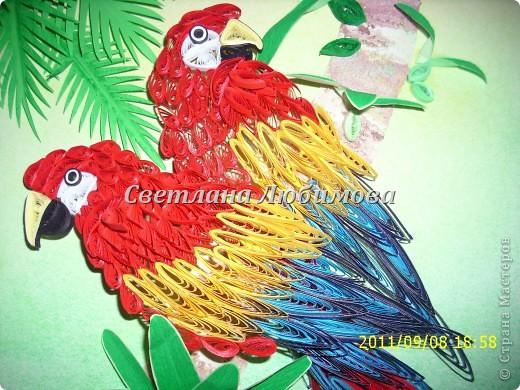 Купила дочери общую тетрадь, а на обложке были эти попугаи. Приглянулись они мне сразу. Решила сделать. И вот что получилось. Делала их очень легко, на одном дыхании. фото 3