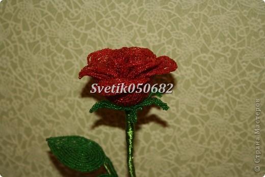 Цветы из бисера (роза) фото 1
