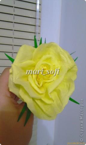 Моя первая роза!  фото 2