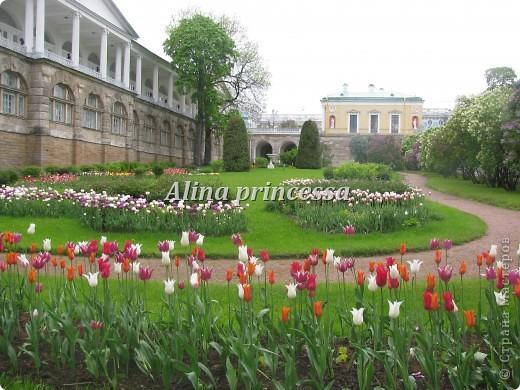 Хочу продемонстрировать вам  цветы в Петербурге и не только!!! я сама не очень люблю срывать цветы-потом хоть и красиво, но и тяжело выбрасывать завянувшие высохшие цветы!!! Ну, в общем смотрите!  фото 13