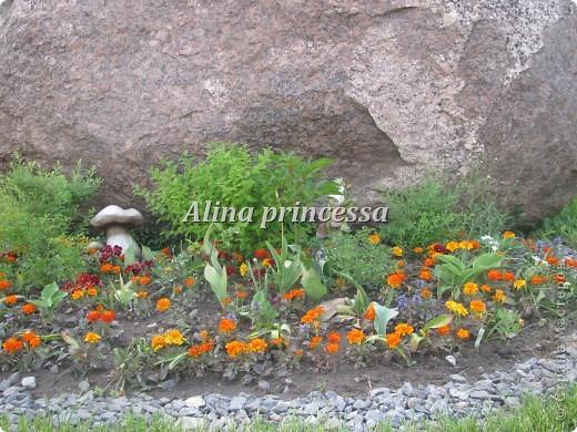 Хочу продемонстрировать вам  цветы в Петербурге и не только!!! я сама не очень люблю срывать цветы-потом хоть и красиво, но и тяжело выбрасывать завянувшие высохшие цветы!!! Ну, в общем смотрите!  фото 17