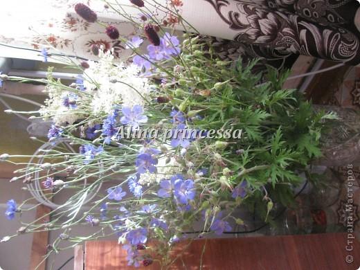 Хочу продемонстрировать вам  цветы в Петербурге и не только!!! я сама не очень люблю срывать цветы-потом хоть и красиво, но и тяжело выбрасывать завянувшие высохшие цветы!!! Ну, в общем смотрите!  фото 20