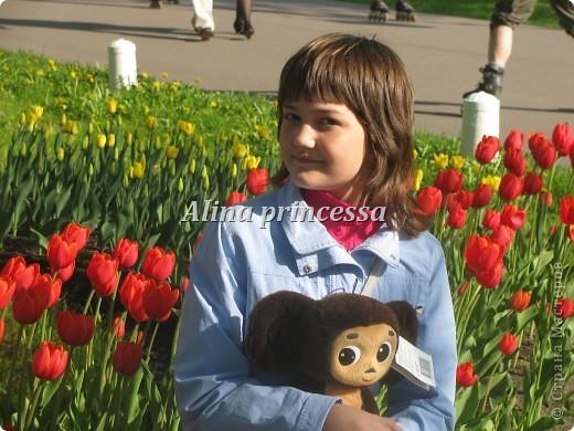 Хочу продемонстрировать вам  цветы в Петербурге и не только!!! я сама не очень люблю срывать цветы-потом хоть и красиво, но и тяжело выбрасывать завянувшие высохшие цветы!!! Ну, в общем смотрите!  фото 1