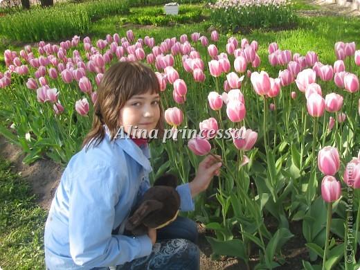 Хочу продемонстрировать вам  цветы в Петербурге и не только!!! я сама не очень люблю срывать цветы-потом хоть и красиво, но и тяжело выбрасывать завянувшие высохшие цветы!!! Ну, в общем смотрите!  фото 2