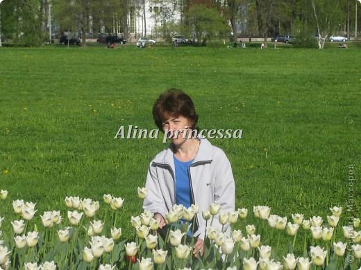 Хочу продемонстрировать вам  цветы в Петербурге и не только!!! я сама не очень люблю срывать цветы-потом хоть и красиво, но и тяжело выбрасывать завянувшие высохшие цветы!!! Ну, в общем смотрите!  фото 3