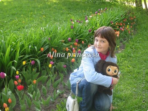 Хочу продемонстрировать вам  цветы в Петербурге и не только!!! я сама не очень люблю срывать цветы-потом хоть и красиво, но и тяжело выбрасывать завянувшие высохшие цветы!!! Ну, в общем смотрите!  фото 5