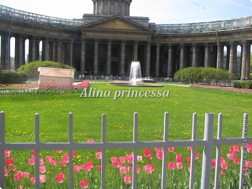 Хочу продемонстрировать вам  цветы в Петербурге и не только!!! я сама не очень люблю срывать цветы-потом хоть и красиво, но и тяжело выбрасывать завянувшие высохшие цветы!!! Ну, в общем смотрите!  фото 6