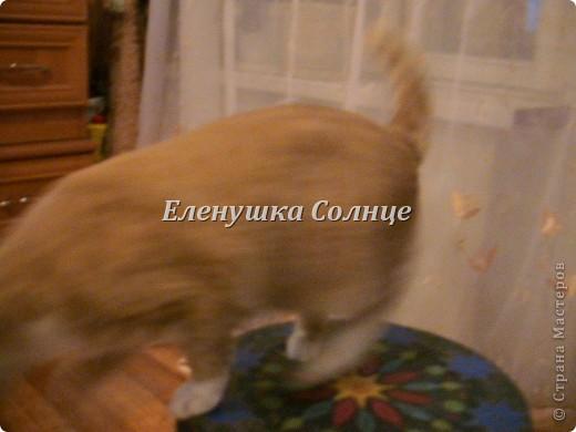 Котик снова в кадре, никак не хочет уходить. фото 2
