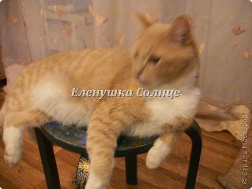 Котик снова в кадре, никак не хочет уходить. фото 12