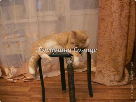 Котик снова в кадре, никак не хочет уходить. фото 1