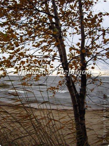 Сегодня по рабочим обстоятельствам меня занесло на берег Финского залива. Фотик был с собой.  Вот ,как говорится,почувствуйте разницу))). Вчерашний солнечный день и сегодняшний-ветренный и пасмурный. Но как бы-то ни было ,все равно очень красиво,хоть и ...сурово))) фото 10