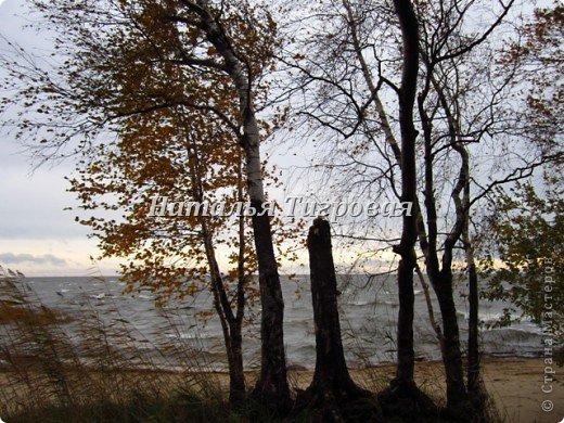 Сегодня по рабочим обстоятельствам меня занесло на берег Финского залива. Фотик был с собой.  Вот ,как говорится,почувствуйте разницу))). Вчерашний солнечный день и сегодняшний-ветренный и пасмурный. Но как бы-то ни было ,все равно очень красиво,хоть и ...сурово))) фото 11