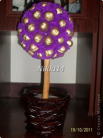 Ореховое деревце. фото 1