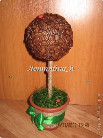 Мое первое кофейное деревце!))  фото 1