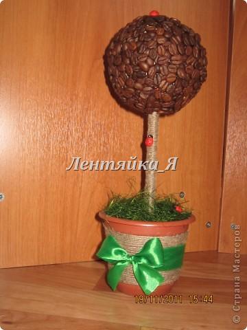Мое первое кофейное деревце!))  фото 2