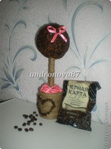 мое  первое кофейное деревце!!!!!!!! фото 1
