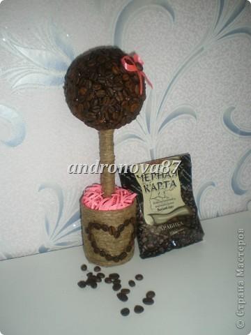 мое  первое кофейное деревце!!!!!!!! фото 2