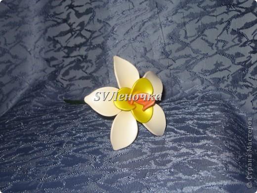 Загадочный цветок фото 4