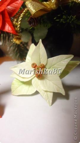 В преддверии новогодних праздников можно увидеть много новогодних украшений, одним из праздничных цветков по праву стала пуансетия. Видя эти замечательные цветы, всегда вспоминаются красивейшие венки с ними. Предлагаю и вам слепить такие красивые рождественские цветы. фото 9