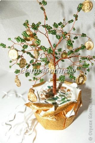 Денежное деревце фото 1